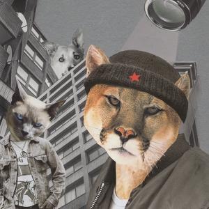 STRAY CATS 2020